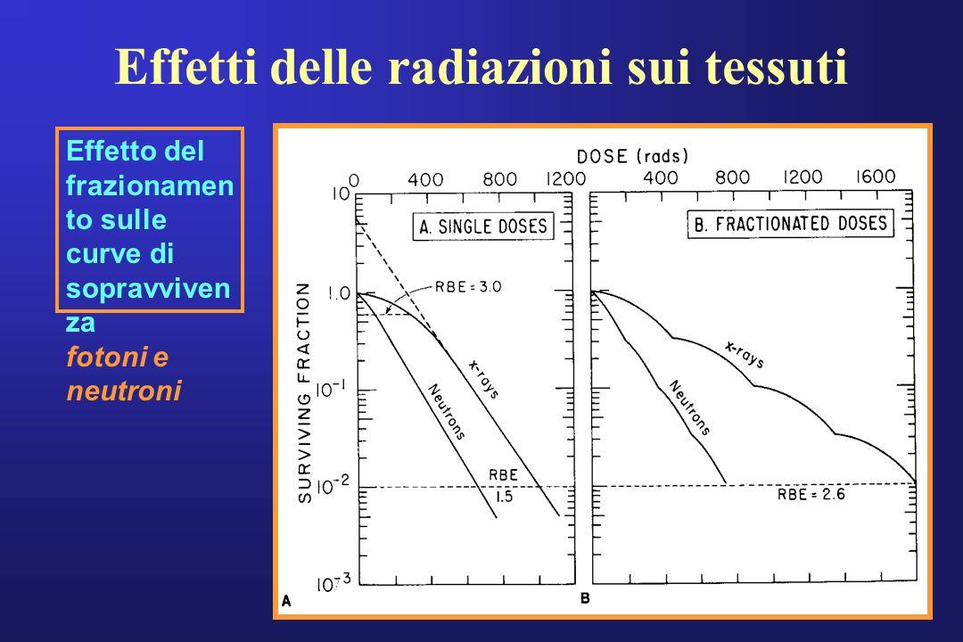 Effetti delle radiazioni sui tessuti Dose Gy Effetto del frazionamen to sulle curve di sopravviven za fotoni e neutroni