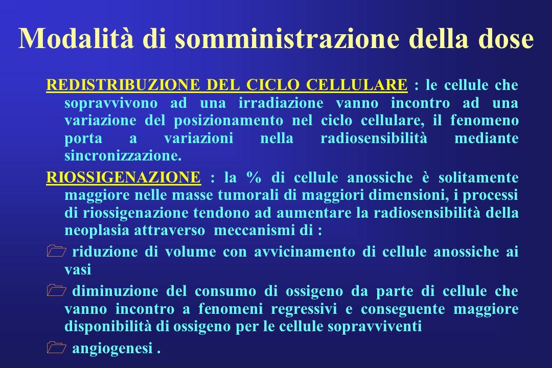 Modalità di somministrazione della dose REDISTRIBUZIONE DEL CICLO CELLULARE : le cellule che sopravvivono ad una irradiazione vanno incontro ad una va