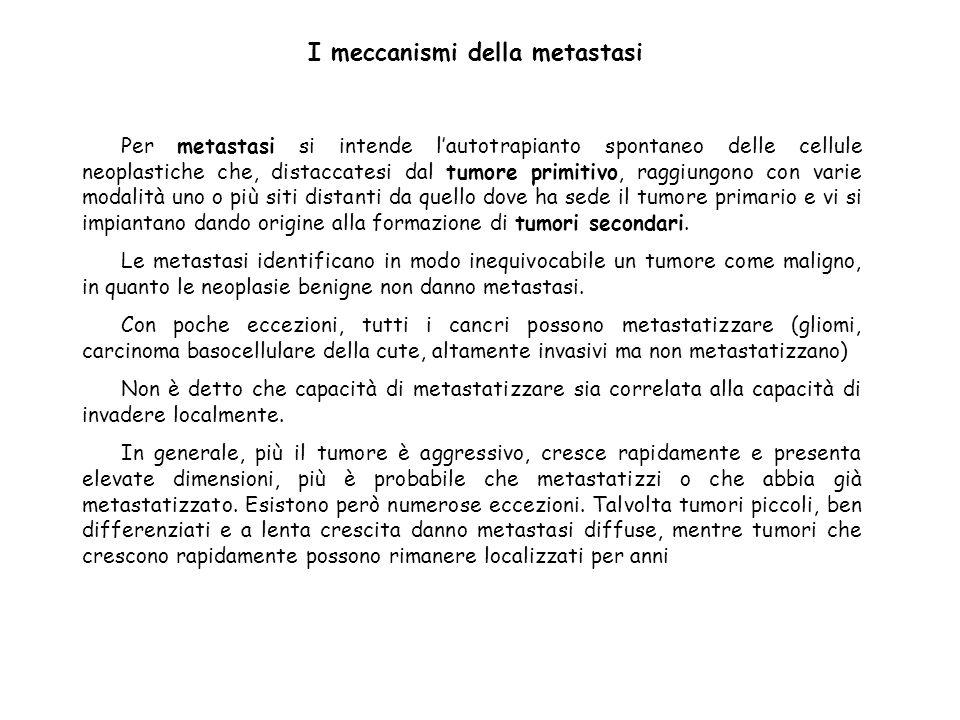 I meccanismi della metastasi Per metastasi si intende lautotrapianto spontaneo delle cellule neoplastiche che, distaccatesi dal tumore primitivo, ragg