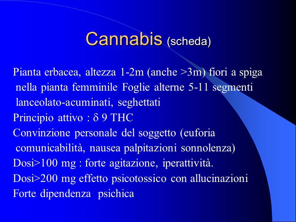 Cannabis (scheda) Pianta erbacea, altezza 1-2m (anche >3m) fiori a spiga nella pianta femminile Foglie alterne 5-11 segmenti lanceolato-acuminati, seg