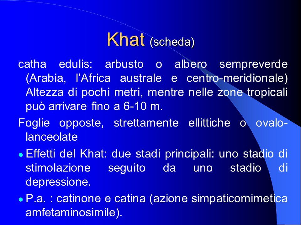 Khat (scheda) catha edulis: arbusto o albero sempreverde (Arabia, lAfrica australe e centro-meridionale) Altezza di pochi metri, mentre nelle zone tro