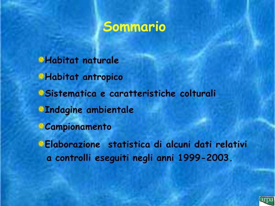 Indagini positive per ricerca di Legionella eseguite in terme (n°2) Anni 1999-2003
