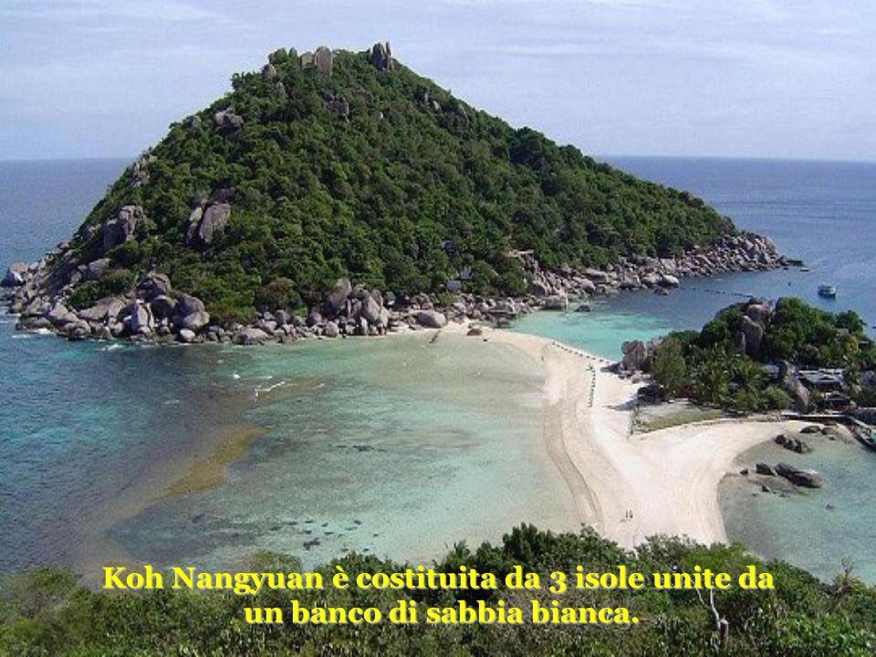 Koh Nangyuan è costituita da 3 isole unite da un banco di sabbia bianca.