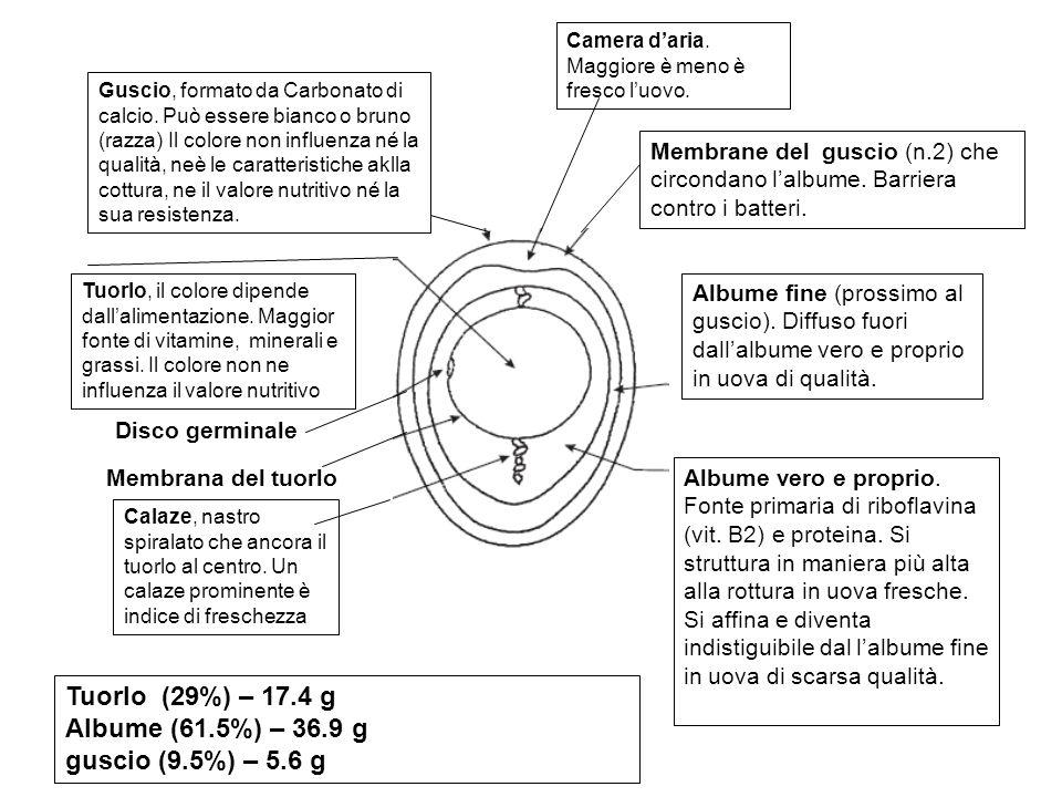 Situazione italiana Non ci sono dubbi: è sufficiente dare un occhiata ai gusci delle uova in vendita per scoprire che il numero 3 , il quale indica l allevamento in gabbia, è quello più frequentemente riportato.