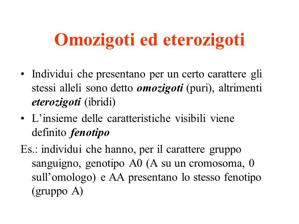 Omozigoti ed eterozigoti Individui che presentano per un certo carattere gli stessi alleli sono detto omozigoti (puri), altrimenti eterozigoti (ibridi