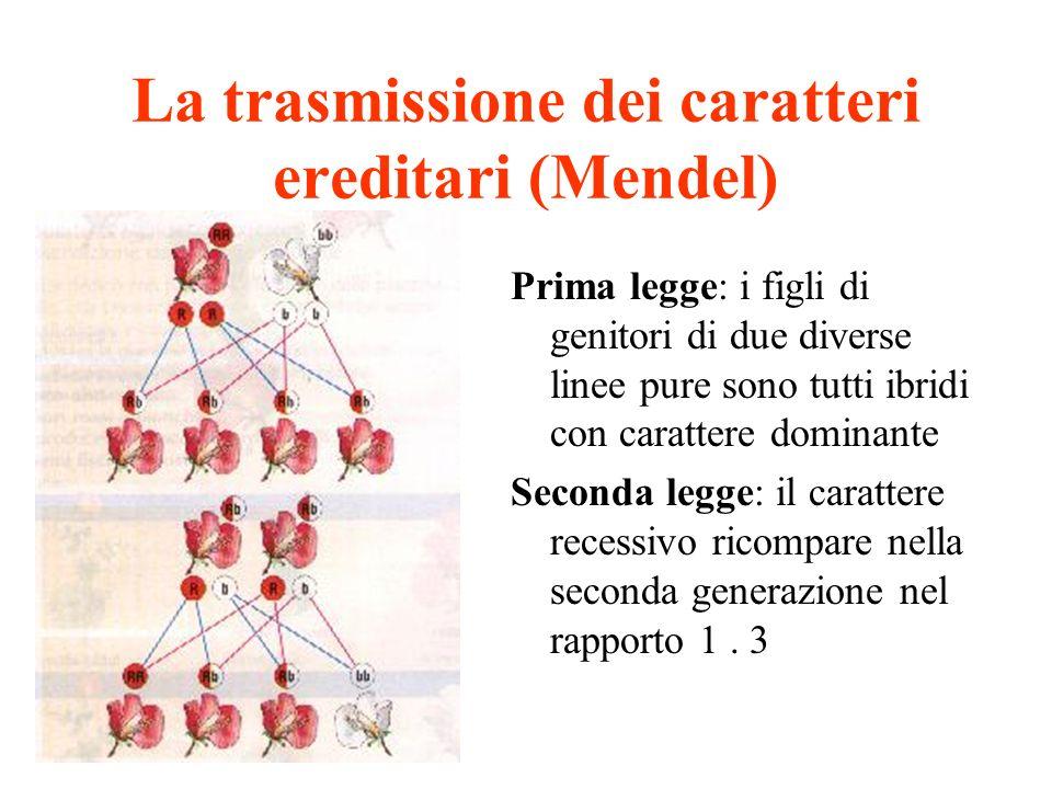 La trasmissione dei caratteri ereditari (Mendel) Prima legge: i figli di genitori di due diverse linee pure sono tutti ibridi con carattere dominante
