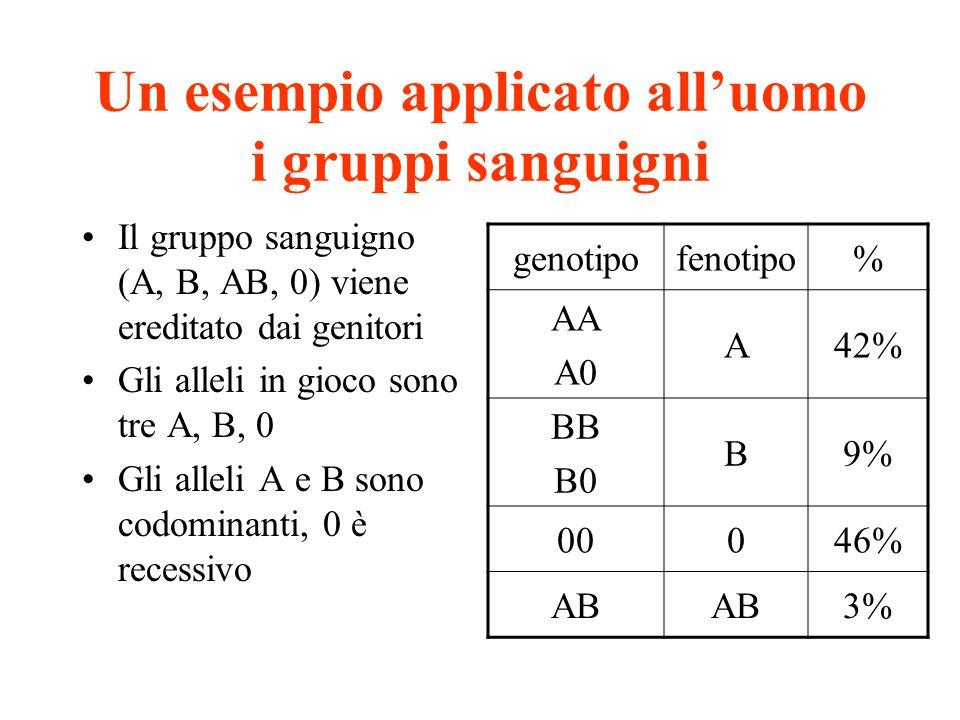 Un esempio applicato alluomo i gruppi sanguigni Il gruppo sanguigno (A, B, AB, 0) viene ereditato dai genitori Gli alleli in gioco sono tre A, B, 0 Gl
