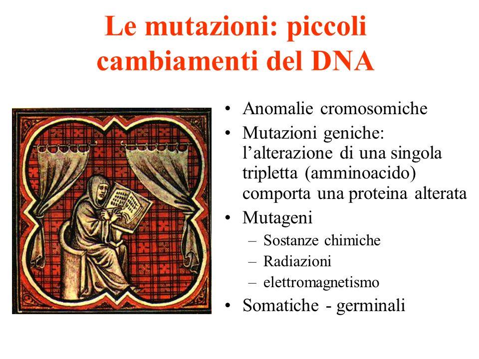 Le mutazioni: piccoli cambiamenti del DNA Anomalie cromosomiche Mutazioni geniche: lalterazione di una singola tripletta (amminoacido) comporta una pr