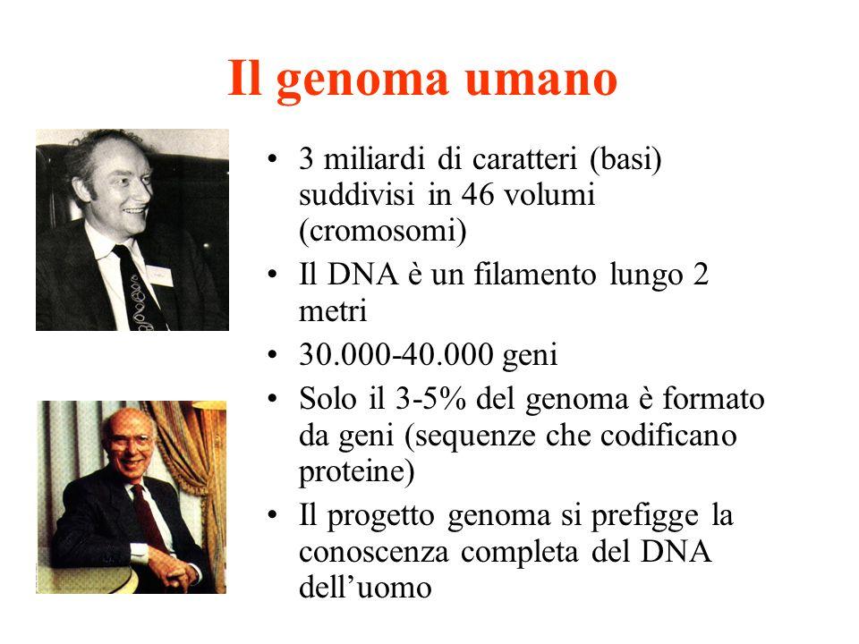 Il genoma umano 3 miliardi di caratteri (basi) suddivisi in 46 volumi (cromosomi) Il DNA è un filamento lungo 2 metri 30.000-40.000 geni Solo il 3-5%