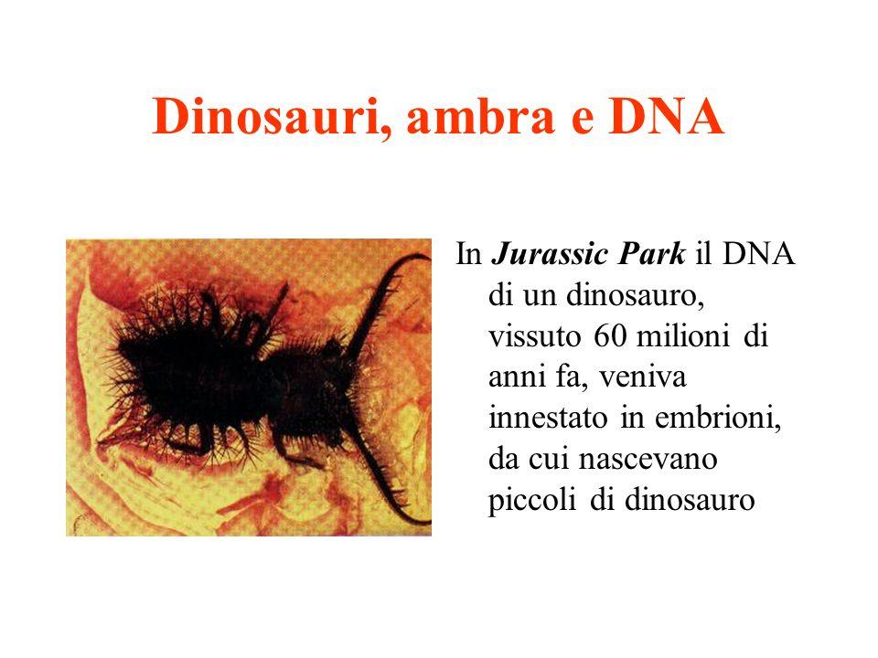 Dinosauri, ambra e DNA In Jurassic Park il DNA di un dinosauro, vissuto 60 milioni di anni fa, veniva innestato in embrioni, da cui nascevano piccoli