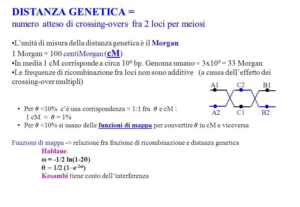 DISTANZA GENETICA = numero atteso di crossing-overs fra 2 loci per meiosi Lunità di misura della distanza genetica è il Morgan 1 Morgan = 100 centiMor