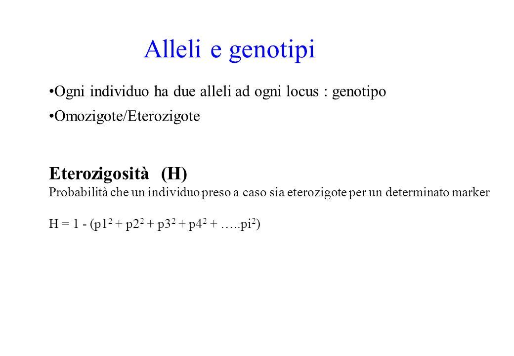 Alleli e genotipi Ogni individuo ha due alleli ad ogni locus : genotipo Omozigote/Eterozigote Eterozigosità (H) Probabilità che un individuo preso a c