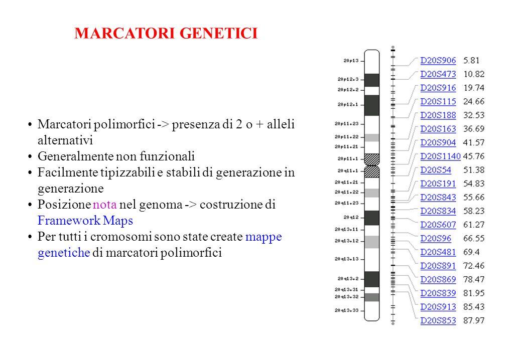 Marcatori polimorfici -> presenza di 2 o + alleli alternativi Generalmente non funzionali Facilmente tipizzabili e stabili di generazione in generazio