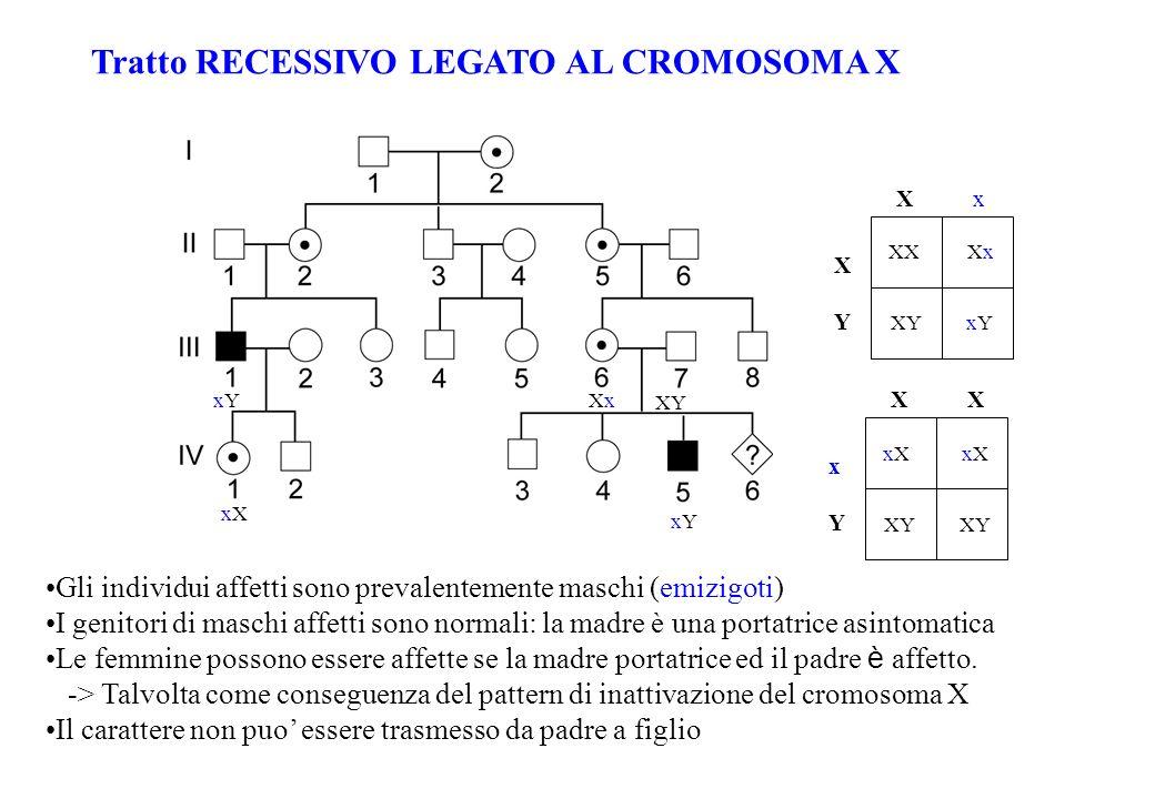 Tratto RECESSIVO LEGATO AL CROMOSOMA X Gli individui affetti sono prevalentemente maschi (emizigoti) I genitori di maschi affetti sono normali: la mad