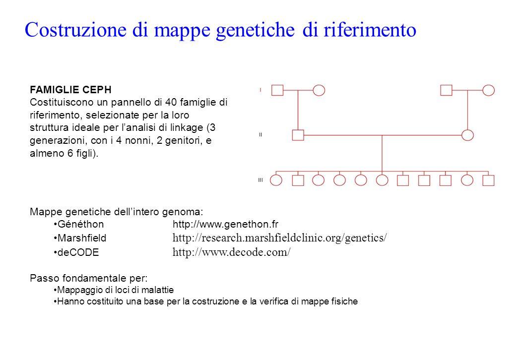 FAMIGLIE CEPH Costituiscono un pannello di 40 famiglie di riferimento, selezionate per la loro struttura ideale per lanalisi di linkage (3 generazioni