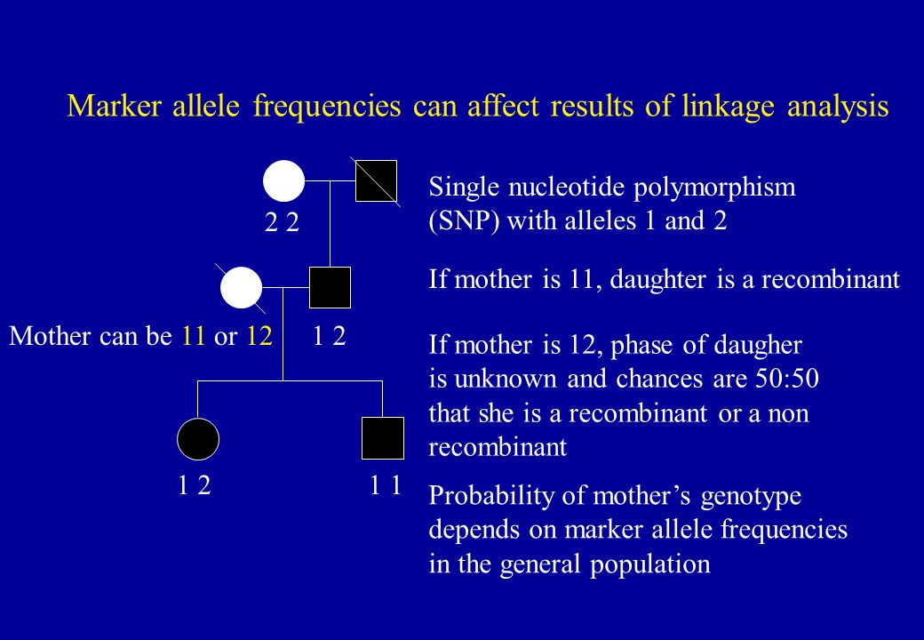 Marker allele frequencies can affect results of linkage analysis 2 1 2 1 2 1 1 If mother is 12, phase of daugher is unknown and chances are 50:50 that