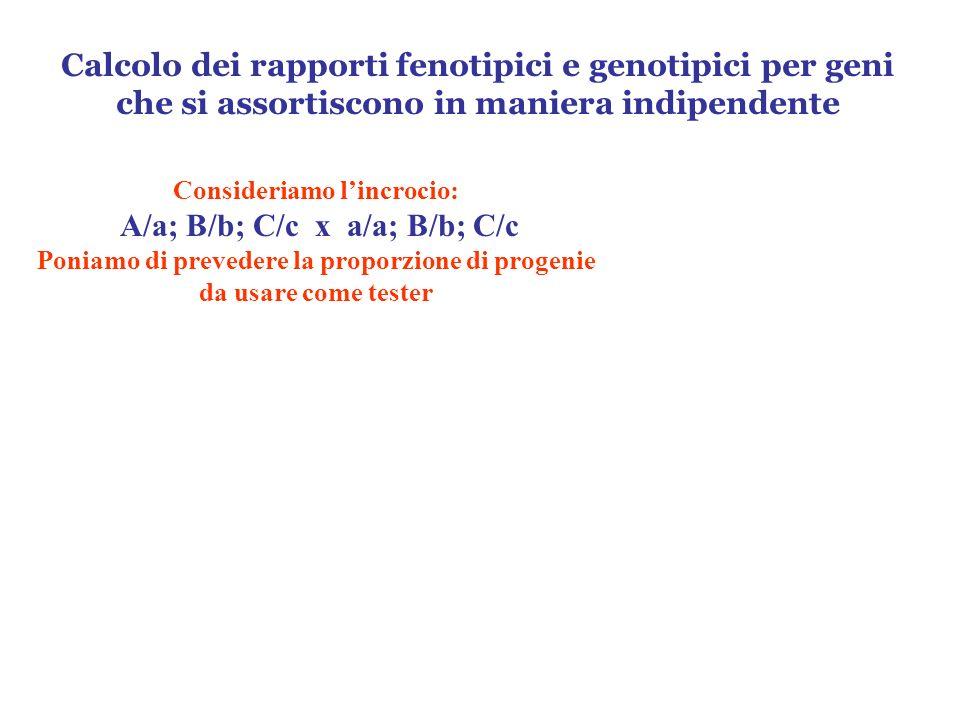 Consideriamo lincrocio: A/a; B/b; C/c x a/a; B/b; C/c Poniamo di prevedere la proporzione di progenie da usare come tester Calcolo dei rapporti fenoti