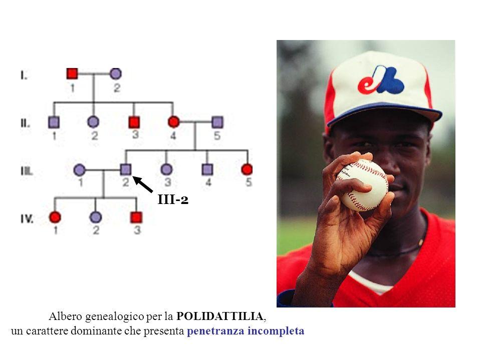 Albero genealogico per la POLIDATTILIA, un carattere dominante che presenta penetranza incompleta III-2