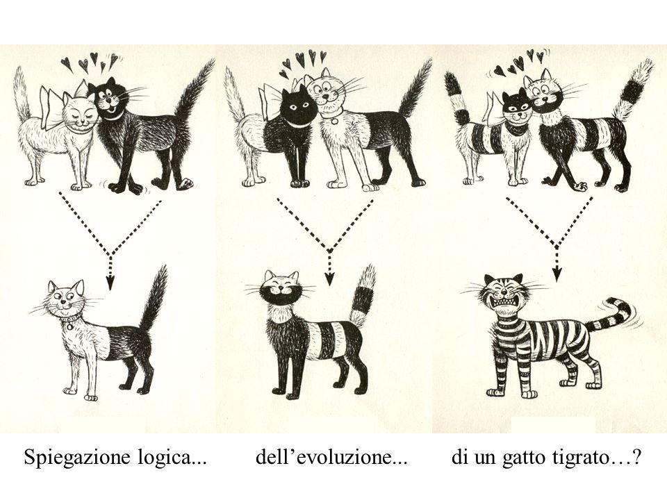 Spiegazione logica...dellevoluzione...di un gatto tigrato…?