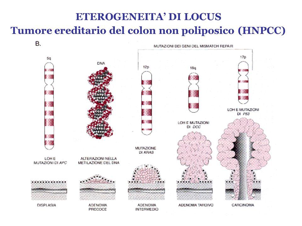 ETEROGENEITA DI LOCUS Tumore ereditario del colon non poliposico (HNPCC)
