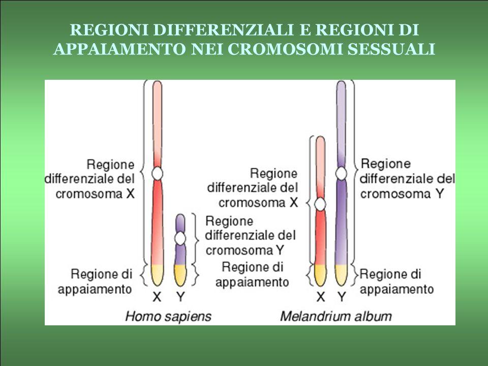 REGIONI DIFFERENZIALI E REGIONI DI APPAIAMENTO NEI CROMOSOMI SESSUALI