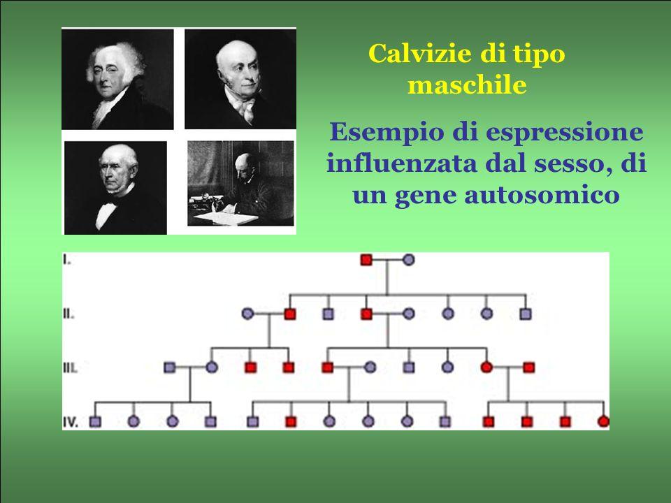 Esempio di espressione influenzata dal sesso, di un gene autosomico Calvizie di tipo maschile