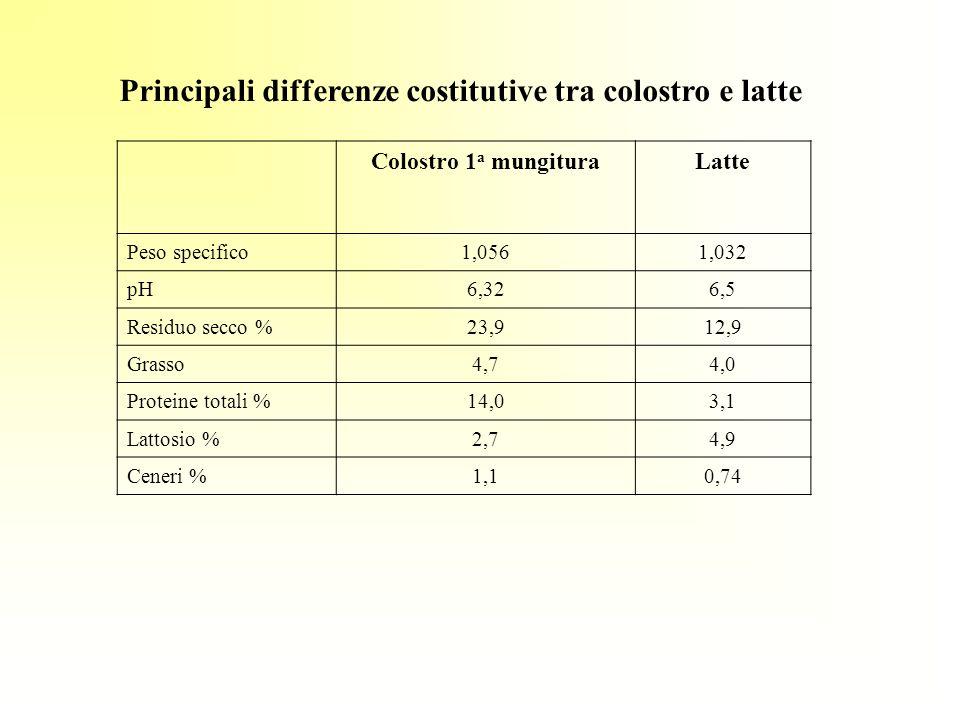 Principali differenze costitutive tra colostro e latte Colostro 1 a mungituraLatte Peso specifico1,0561,032 pH6,326,5 Residuo secco %23,912,9 Grasso4,