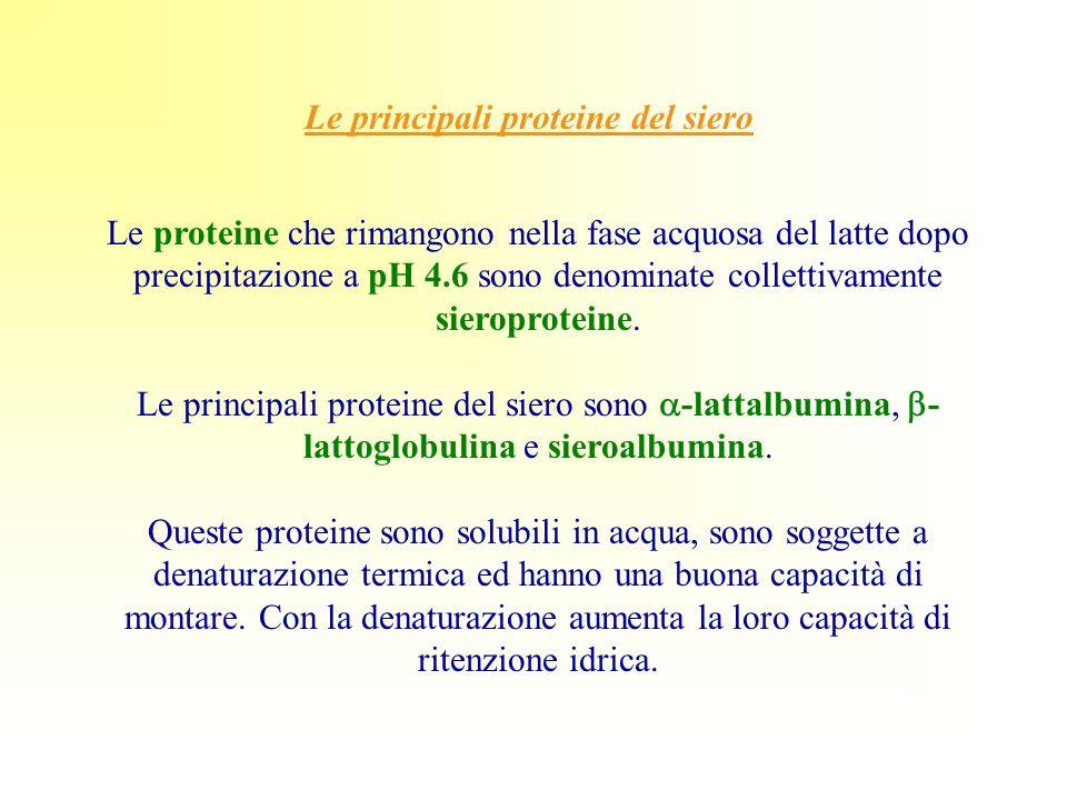 Le principali proteine del siero Le proteine che rimangono nella fase acquosa del latte dopo precipitazione a pH 4.6 sono denominate collettivamente s