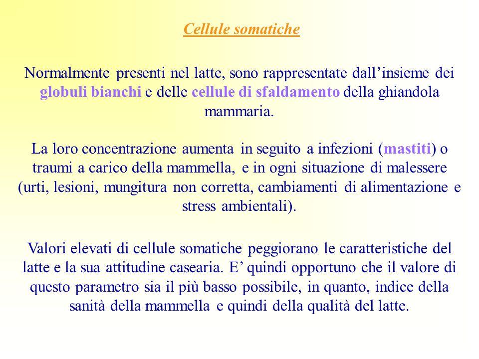 Cellule somatiche Normalmente presenti nel latte, sono rappresentate dallinsieme dei globuli bianchi e delle cellule di sfaldamento della ghiandola ma