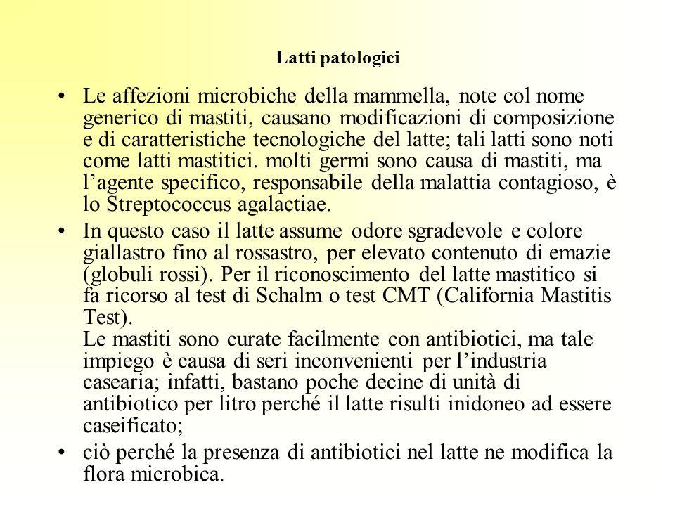 Latti patologici Le affezioni microbiche della mammella, note col nome generico di mastiti, causano modificazioni di composizione e di caratteristiche