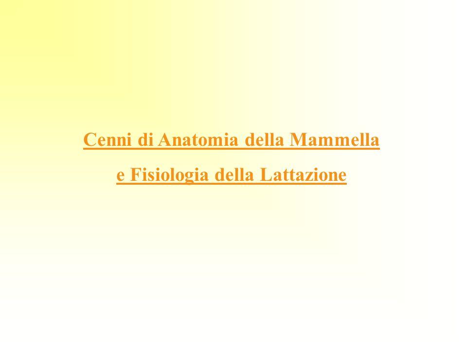Cenni di Anatomia della Mammella e Fisiologia della Lattazione
