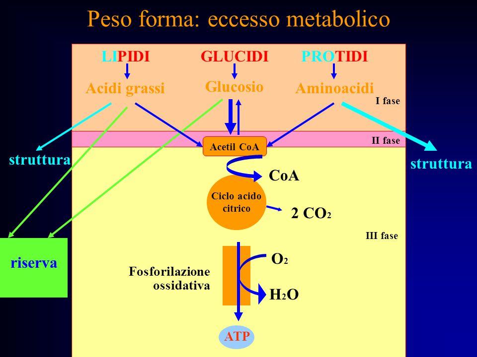 Peso forma: eccesso metabolico LIPIDI Acidi grassi GLUCIDI Glucosio PROTIDI Aminoacidi Acetil CoA ATP riserva O2O2 H2OH2O struttura I fase II fase III
