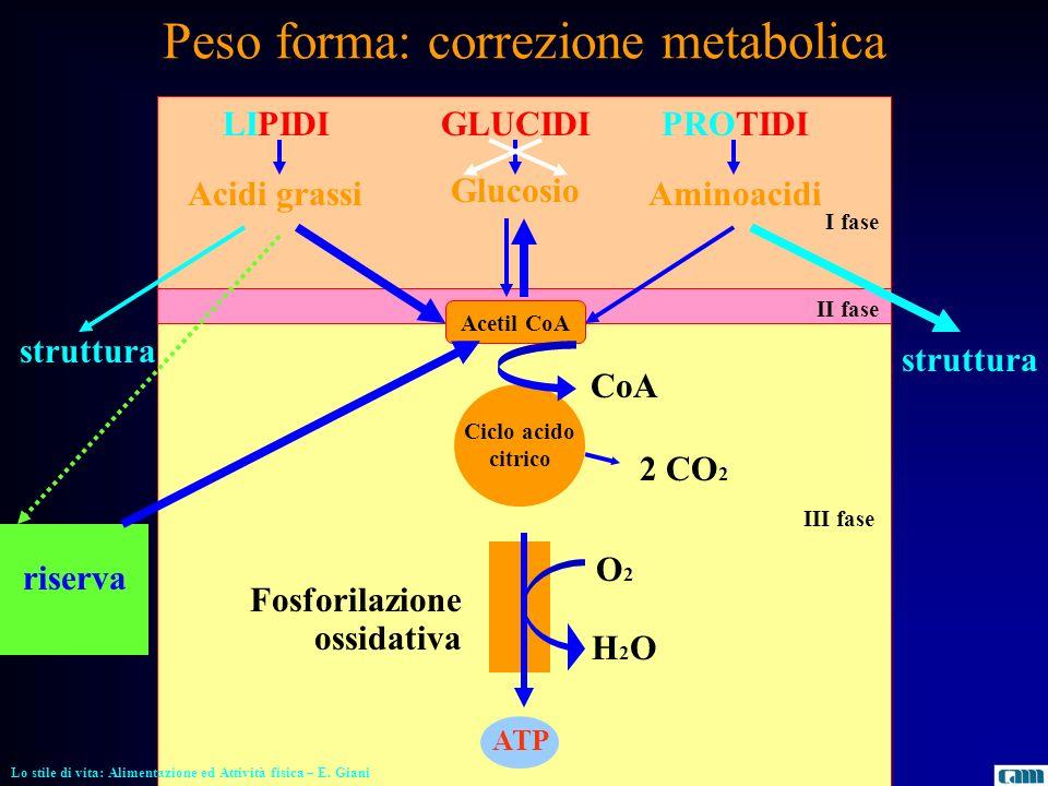 Peso forma: correzione metabolica LIPIDI Acidi grassi GLUCIDI Glucosio PROTIDI Aminoacidi Acetil CoA ATP riserva O2O2 H2OH2O struttura I fase II fase