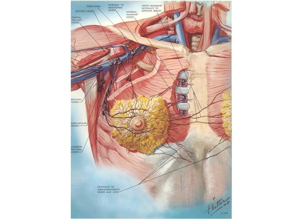 Nei Soggetti Con Probabilità Maggiore Del 10% Mammografia dopo i 30-35 anni ogni 12 mesi Autopalpazione dopo i 20 anni ogni mese Esame clinico ed ecografia mammaria ogni 6 mesi Eco transvaginale e ca125 dopo i 35 anni ogni 12 mesi Mammografia dopo i 30-35 anni ogni 12 mesi Autopalpazione dopo i 20 anni ogni mese Esame clinico ed ecografia mammaria ogni 6 mesi Eco transvaginale e ca125 dopo i 35 anni ogni 12 mesi