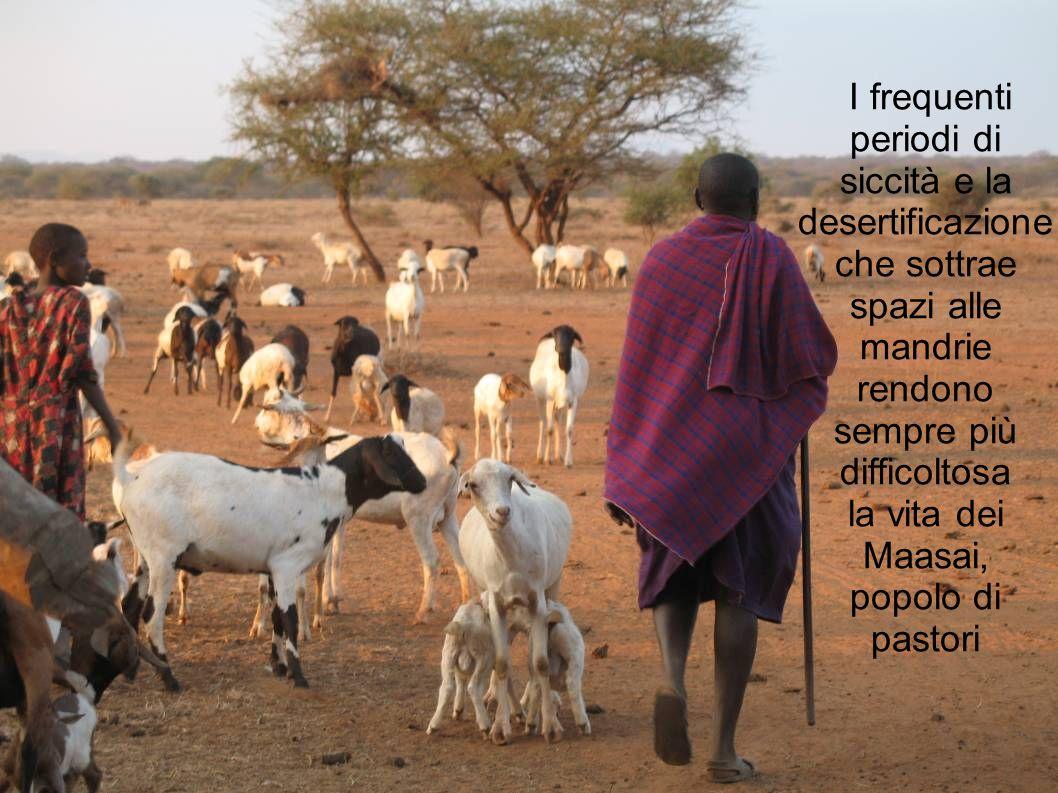 I frequenti periodi di siccità e la desertificazione che sottrae spazi alle mandrie rendono sempre più difficoltosa la vita dei Maasai, popolo di past