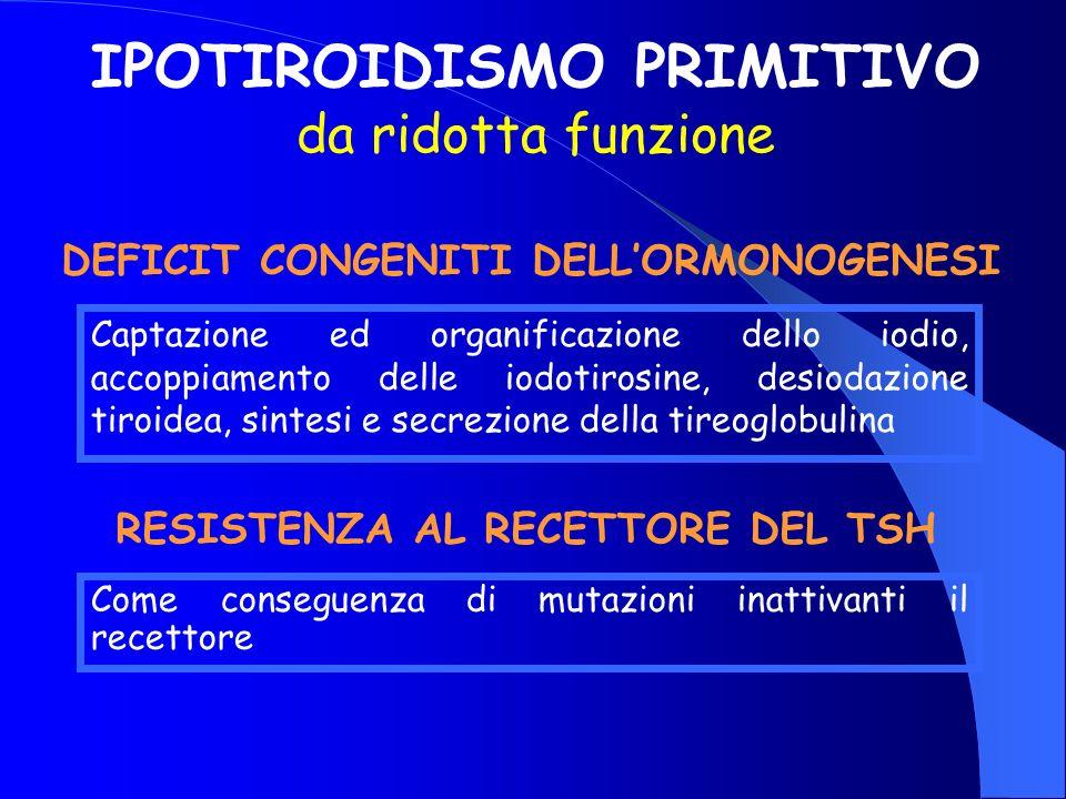 Captazione ed organificazione dello iodio, accoppiamento delle iodotirosine, desiodazione tiroidea, sintesi e secrezione della tireoglobulina IPOTIROI
