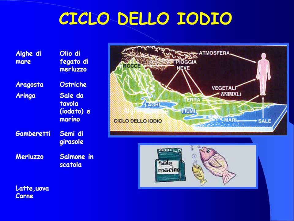 CICLO DELLO IODIO Alghe di mare Olio di fegato di merluzzo AragostaOstriche AringaSale da tavola (iodato) e marino GamberettiSemi di girasole Merluzzo