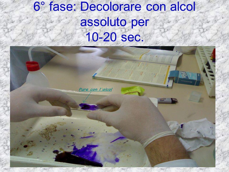 5° fase: lavare il vetrino con acqua