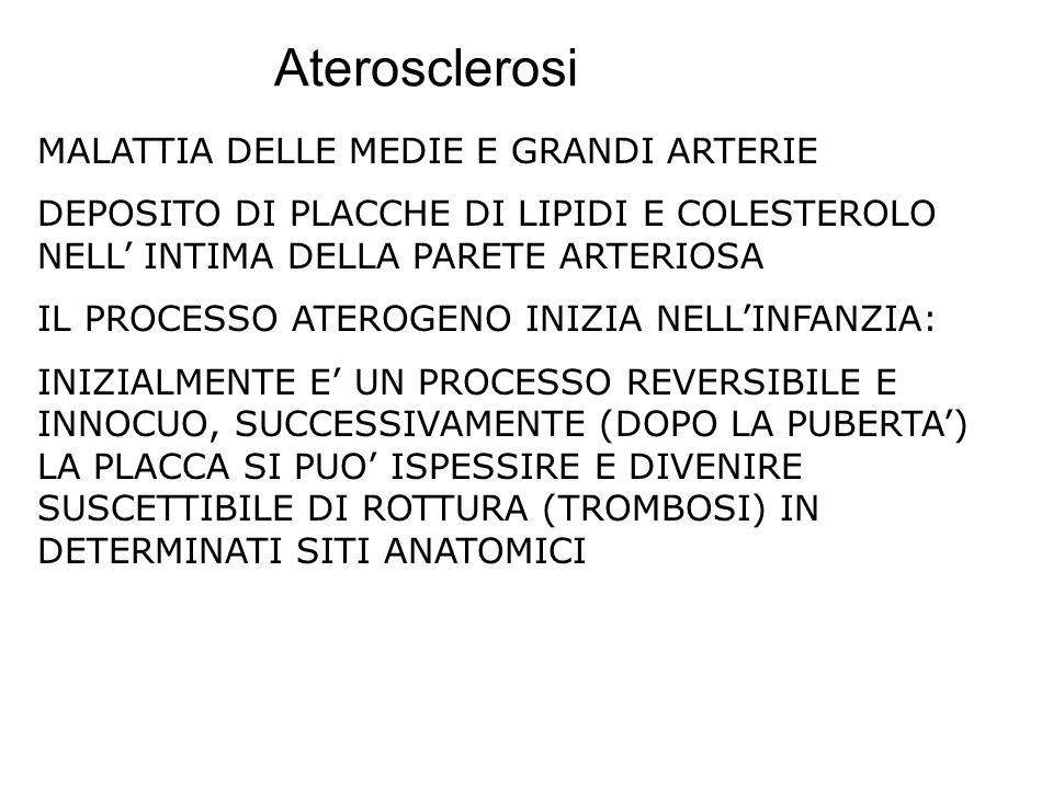 Aterosclerosi MALATTIA DELLE MEDIE E GRANDI ARTERIE DEPOSITO DI PLACCHE DI LIPIDI E COLESTEROLO NELL INTIMA DELLA PARETE ARTERIOSA IL PROCESSO ATEROGE