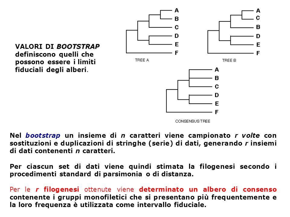 Nel bootstrap un insieme di n caratteri viene campionato r volte con sostituzioni e duplicazioni di stringhe (serie) di dati, generando r insiemi di d
