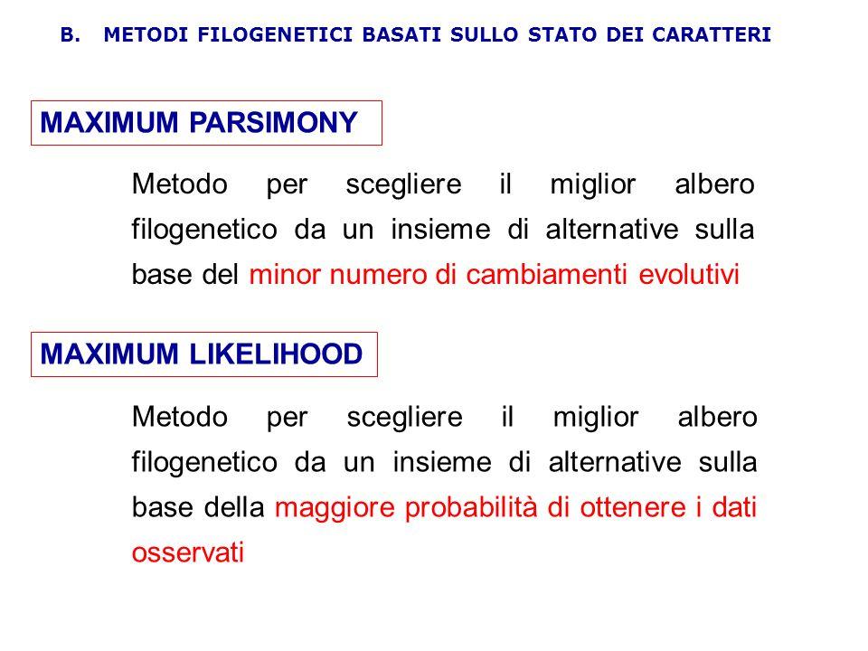 MAXIMUM PARSIMONY Metodo per scegliere il miglior albero filogenetico da un insieme di alternative sulla base del minor numero di cambiamenti evolutiv
