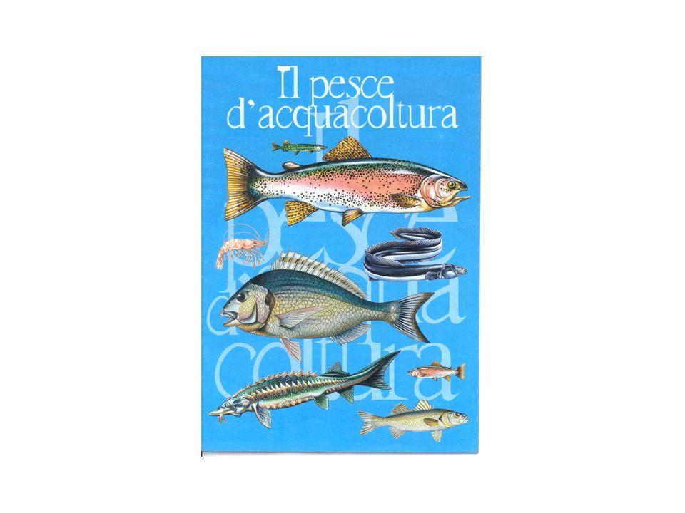E una specie molto comune nel Mediterraneo e nell Atlantico Occidentale dove si riproduce (Mar dei Sargassi).