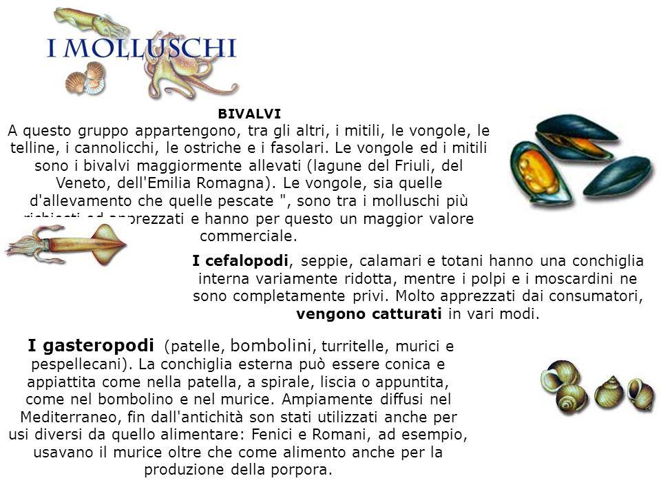 BIVALVI A questo gruppo appartengono, tra gli altri, i mitili, le vongole, le telline, i cannolicchi, le ostriche e i fasolari. Le vongole ed i mitili
