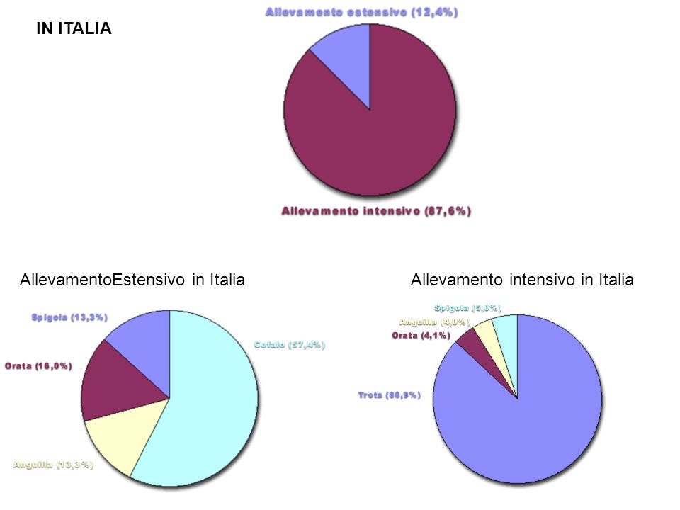 Allevamento intensivo in Italia IN ITALIA AllevamentoEstensivo in Italia
