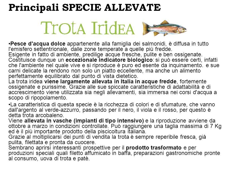 Principali SPECIE ALLEVATE Pesce d'acqua dolce appartenente alla famiglia dei salmonidi, è diffusa in tutto l'emisfero settentrionale, dalle zone temp