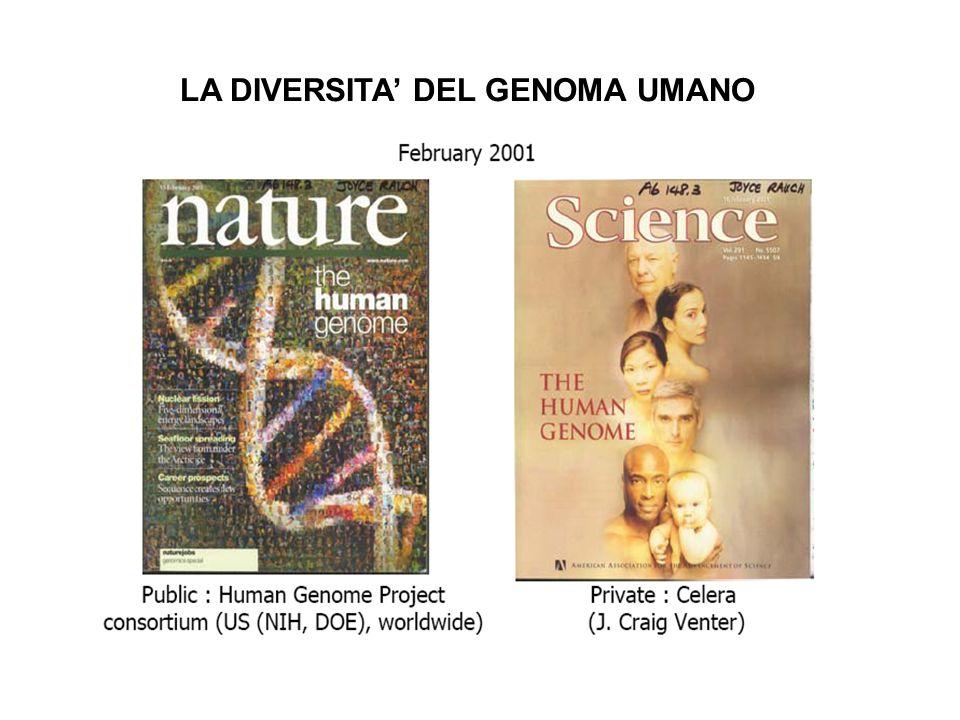 mtDNA HVS I La specie umana è la meno variabile Xq13.3