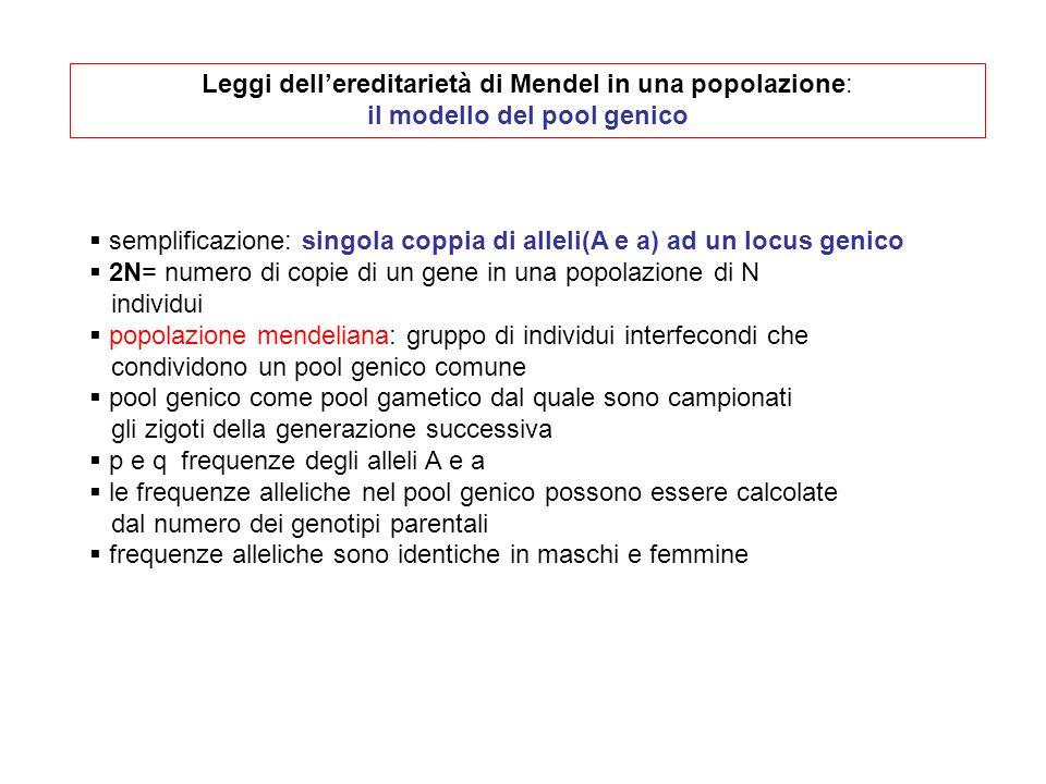 Leggi dellereditarietà di Mendel in una popolazione: il modello del pool genico semplificazione: singola coppia di alleli(A e a) ad un locus genico 2N