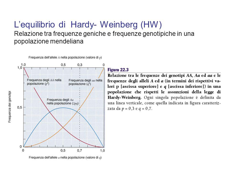 Lequilibrio di Hardy- Weinberg (HW) Relazione tra frequenze geniche e frequenze genotipiche in una popolazione mendeliana