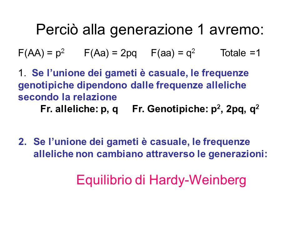 Perciò alla generazione 1 avremo: F(AA) = p 2 F(Aa) = 2pq F(aa) = q 2 Totale =1 1. Se lunione dei gameti è casuale, le frequenze genotipiche dipendono