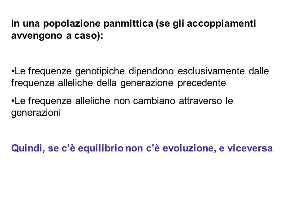 In una popolazione panmittica (se gli accoppiamenti avvengono a caso): Le frequenze genotipiche dipendono esclusivamente dalle frequenze alleliche del
